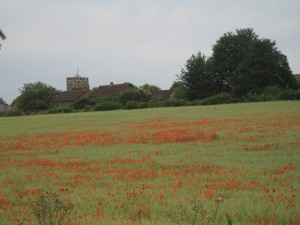 This one is for Peter who likes his poppies! We passed many a poppy field on our travels, this is the best shot so far.